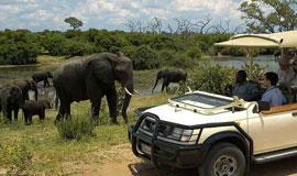 Game drive - elephants